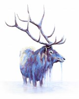 Elk in Water Fine-Art Print