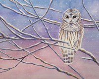 Snowy Barred Owl Fine-Art Print