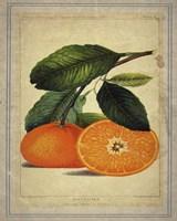 Oranges 1 Fine-Art Print