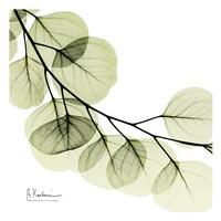 Mint Eucalyptus 2 Fine-Art Print