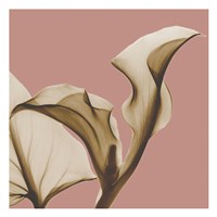 Luster Callaqua Fine-Art Print