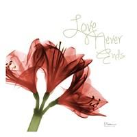 Amaryllis Love Fine-Art Print