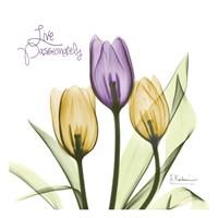 Live Passionately Tulips Fine-Art Print