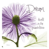 Purple Chrysanthemum Dream Fine-Art Print