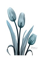 Midnight Sky Tulip Trio Fine-Art Print