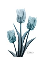 Midnight Sky Tulip Trio 2 Fine-Art Print