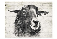 Vintage Sheep Fine-Art Print
