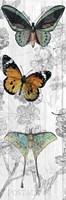 Butterflies Are Free 1 Fine-Art Print