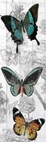 Butterflies Are Free 2 Fine-Art Print