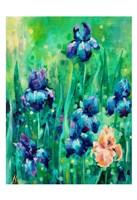 Irises 1 Fine-Art Print