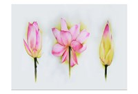Lotus Tryptic Fine-Art Print