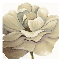 Cream Silken Bloom Fine-Art Print