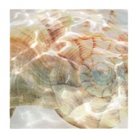 Shell Abstract 1 Fine-Art Print