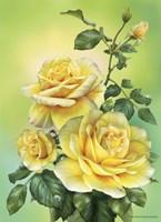 Roses Yellow Fine-Art Print