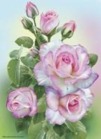 Morning Roses Fine-Art Print