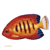Fish 2 Red-Yellow Fine-Art Print