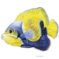 Fish 3 Blue-Yellow Fine-Art Print