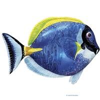 Fish 4 Blue-Yellow Fine-Art Print