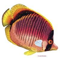 New Fish 1 Fine-Art Print