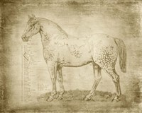 Horse Anatomy 101 Fine-Art Print