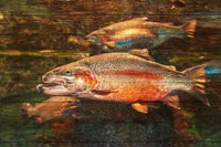 A Good Day to Be a Salmon Fine-Art Print