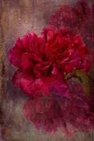 Tapestry Rose Fine-Art Print