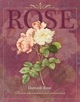 Damask Rose Fine-Art Print