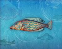 Swimmingly II Fine-Art Print