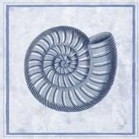 Blue Nautilus A Fine-Art Print