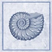 Blue Nautilus C Fine-Art Print