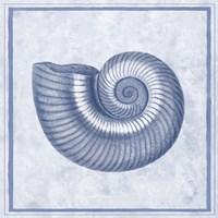 Blue Nautilus D Fine-Art Print