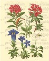 Allegro I Fine-Art Print