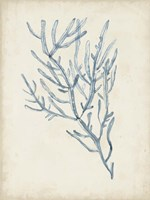 Seaweed Specimens III Fine-Art Print