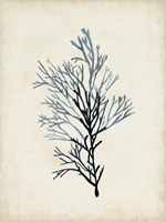 Seaweed Specimens IV Fine-Art Print