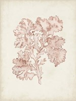 Seaweed Specimens VI Fine-Art Print