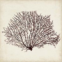 Seaweed Specimens XII Fine-Art Print