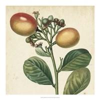 Garden Bounty I Fine-Art Print