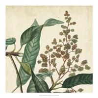 Garden Bounty II Fine-Art Print