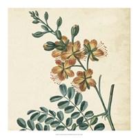 Garden Bounty III Fine-Art Print