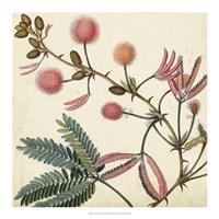 Garden Bounty IV Fine-Art Print
