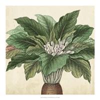 Garden Bounty V Fine-Art Print