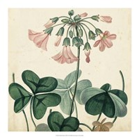 Garden Bounty VIII Fine-Art Print