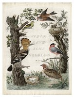 Woodpecker Sanctuary Fine-Art Print