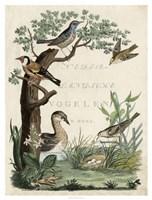 Duck Sanctuary Fine-Art Print