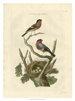 Nozeman Birds & Nests  I Fine-Art Print