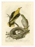 Nozeman Birds & Nests  II Fine-Art Print