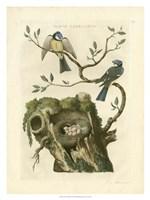 Nozeman Birds & Nests  III Fine-Art Print
