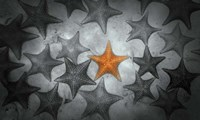 Pop of Color Orange Starfish Fine-Art Print