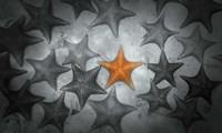 Pop of Color Orange Starfish Fine-Art Print