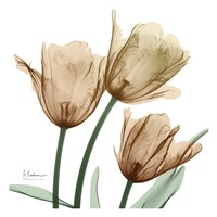Autumn Tulips 1 Fine-Art Print